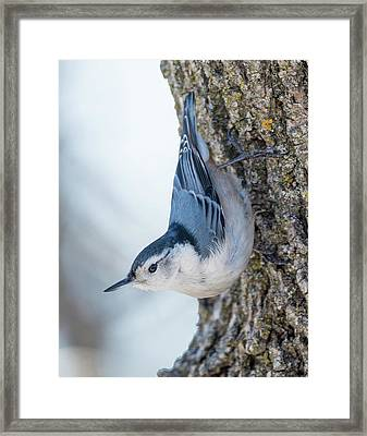 The Nut Collector... Framed Print