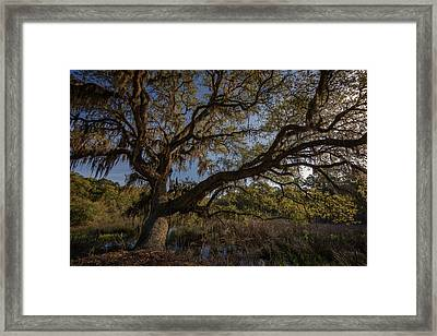 The Oak By The Side Of The Road Framed Print by Rick Berk