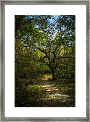 The Oak Trail Framed Print by Marvin Spates