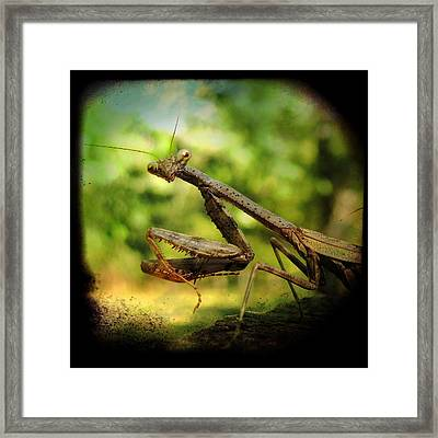 The Observer Framed Print by Amy Tyler
