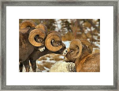 The Odd Man Out Framed Print