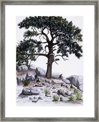 The Offering Tree Framed Print by Tom Dorsz