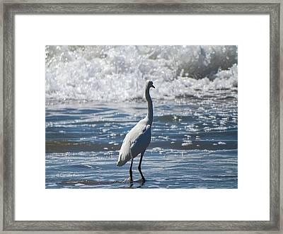 Egret And The Waves Framed Print