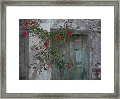 The Old Door And The Rose Bush Framed Print by Wilhelm Terrada