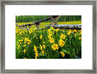 The Old Fence Framed Print