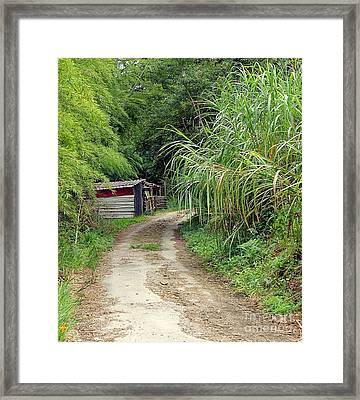 Framed Print featuring the photograph The Old Forest Road by Yali Shi