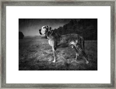 Framed Print featuring the photograph The Old Great Dane by Marc Huebner