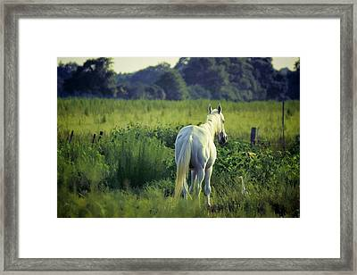 The Old Grey Mare Framed Print by Jan Amiss Photography