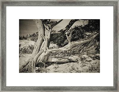 The Old Man Framed Print