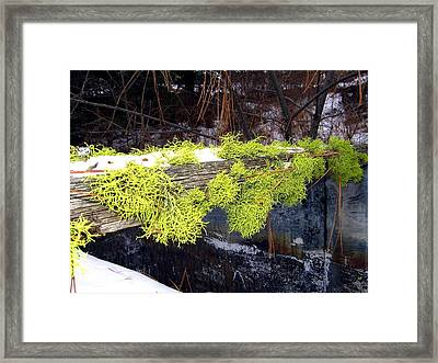 The Old Mossy Flume Framed Print by Will Borden