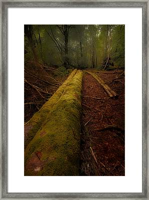 The Old Mossy Trunk Framed Print