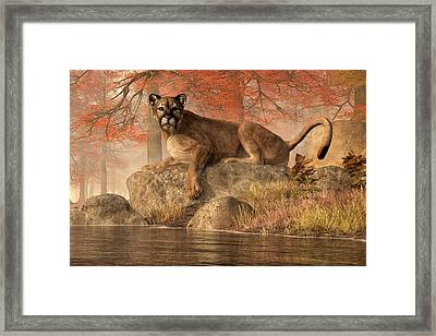 The Old Mountain Lion Framed Print by Daniel Eskridge