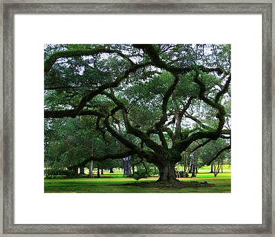 The Old Oak Framed Print