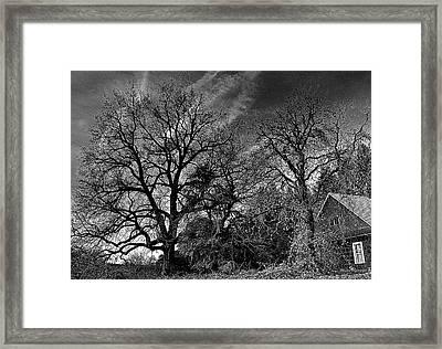 The Old Oak Tree Framed Print by Steve Warnstaff