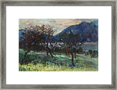 The Old Olive Trees Framed Print