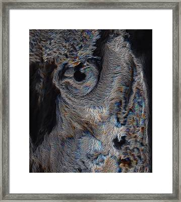The Old Owl That Watches Framed Print by ISAW Gallery