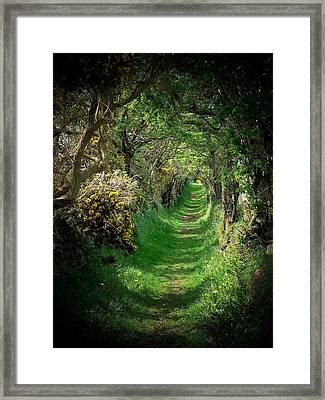 The Old Road Framed Print by Cat Shatwell