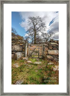 The Old Tree Framed Print by Adrian Evans
