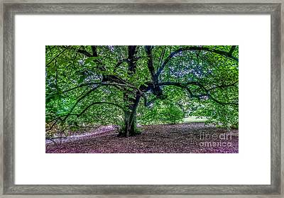 The Old Tree At Frelinghuysen Arboretum Framed Print