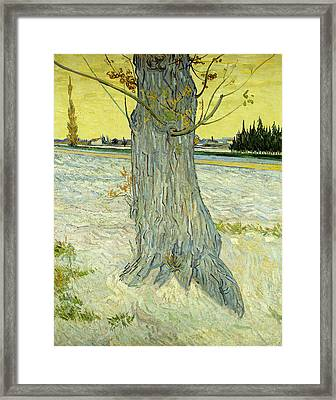 The Old Tree Framed Print by Vincent Van Gogh