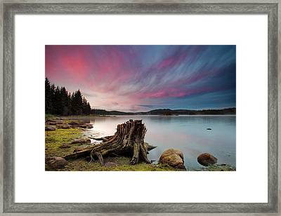 The Old Trunk Framed Print by Evgeni Dinev