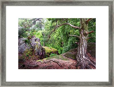 The Oldies Framed Print