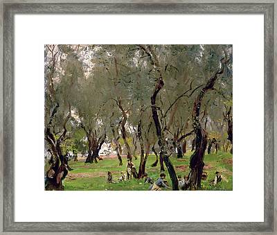 The Olive Grove Framed Print by John Singer Sargeant