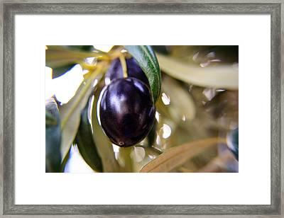 The Olive Framed Print