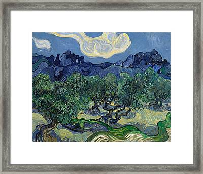 The Olive Trees Framed Print by Vincent van Gogh