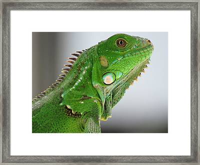 The Omnivorous Lizard Framed Print