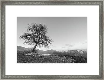 The One Framed Print by Davorin Mance