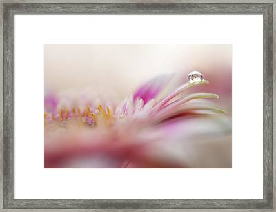 Framed Print featuring the photograph The One. Macro Gerbera by Jenny Rainbow