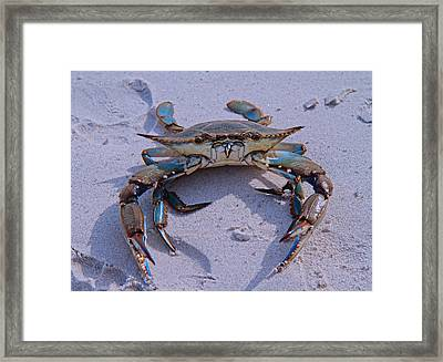 The One That Got Away Framed Print by Betsy Knapp