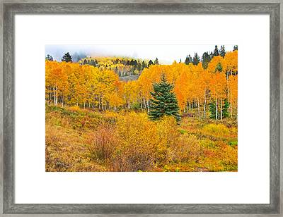 The One That Stands Out  Framed Print
