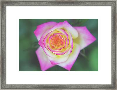 The One That You Love Framed Print