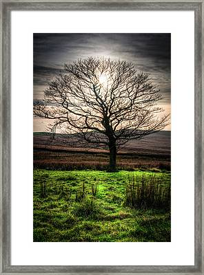 The One Tree Framed Print