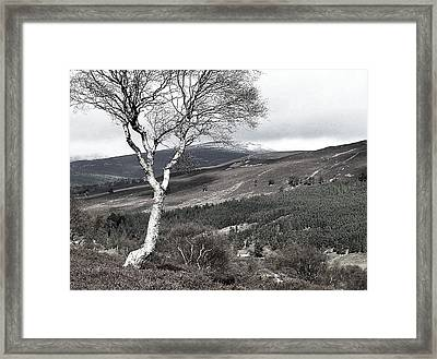 The One Framed Print by HweeYen Ong