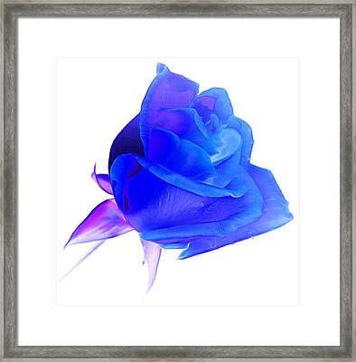 The Only One Framed Print by Krissy Katsimbras