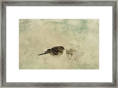The Orange And Sparrow Framed Print
