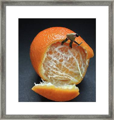 The Orange Factory Framed Print by Martin Newman