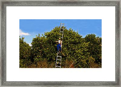 The Orange Picker Framed Print by David Lee Thompson
