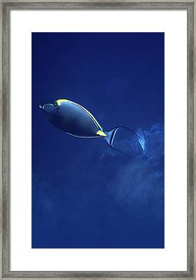 The Orangespine Unicornfish And The Deep Blue Sea Framed Print