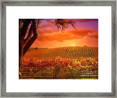 The Other Side Of Oz Vineyard Framed Print