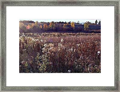 The Overgrown Field In The Late October Afternoon Sun. Framed Print
