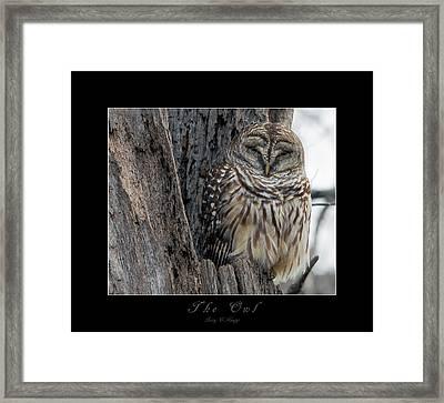 The Owl Framed Print by Betsy Knapp