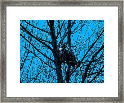 The Owl . Blue Framed Print by Wingsdomain Art and Photography