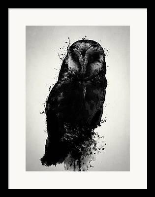 Owls Framed Prints