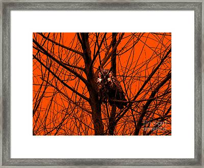 The Owl . Orange Framed Print by Wingsdomain Art and Photography