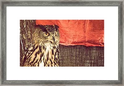 The Owl Framed Print by Pedro Venancio