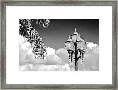 The Palm Fronds And The Lamp Post Framed Print